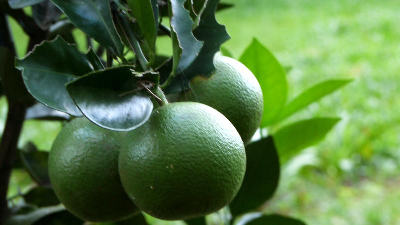Den lägst hängande frukten