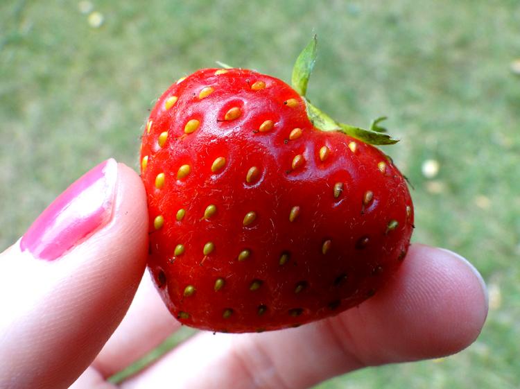 Hjärta jordgubbe