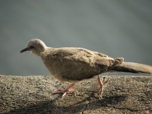 Vandrande fågel